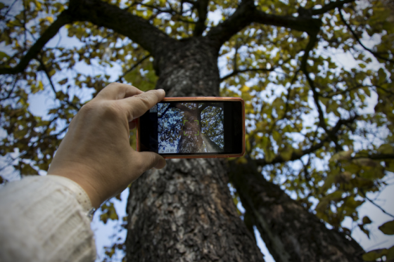 Person-taking-photo-of-tree